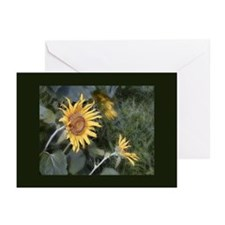 Country Sunflower Greeting Cards (Pk of 10)