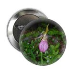 Pink Lady's Slipper Button