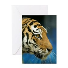 Tiger Sideways Close Up Photograph Greeting Cards
