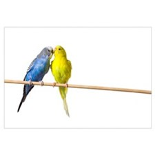 Two Budgies On A Perch