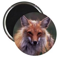 Red Fox Magnet