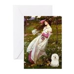 Windflowers & Bolognese Greeting Cards (Pk of 10)