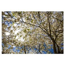 A Tree With Blossoms In Happy Valley Park, Oregon