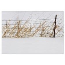 Tall Grass Growing Along A Fence In The Snow, Thun