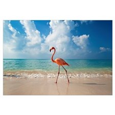 Flamingo Walking Along Beach