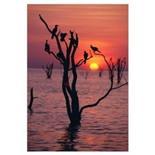 Birds On Tree, Lake Kariba At Sunset; Zimbabwe