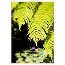 Hawaii, Close-Up Of Bright Green Hapu Ferns