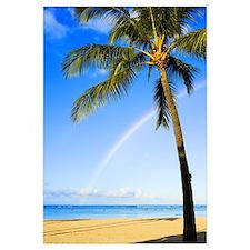 Hawaii, Oahu, Honolulu, Ala Moana Beach Park, Palm