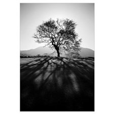 Silhouetted tree on grassy knoll, Shadows in foreg