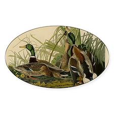 Audubon Mallard duck Bird Vintage Print Decal