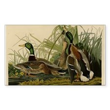 Audubon Mallard duck Bird Vintage Print Decal