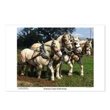 American Cream Draft Horse Team Postcards (Package