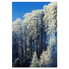 Snow Covered Trees In A Forest, County Antrim, Nor