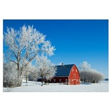 Hoarfrost And Red Barn, Grande Pointe, Manitoba, C