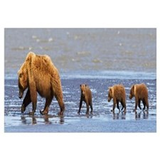 Brown Bear Sow And Her Three Cubs Walking On A Bea
