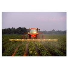 A tractor cultivates mid growth cotton in early mo
