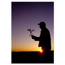 Silhouette of a farmer examining an early growth c
