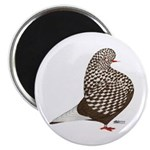 Brown Teager Pigeon 2.25