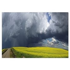 Storm clouds gather over a sunlit canola field and