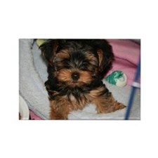 Yorkie Puppy Rectangle Magnet (100 pack)
