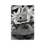 B&W ginham bear Rectangle Magnet