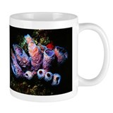 Sponges Taza