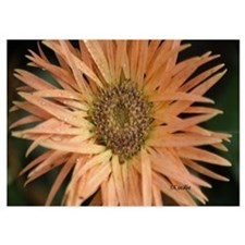 Chrysanthemum flower Invitations