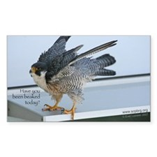 J-117 Have You Been Beaked Today 5 x 3 Decal