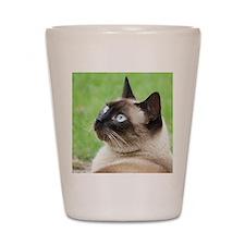 Siamese Cat Shot Glass