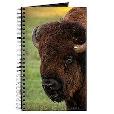 Buffalo Profile Journal