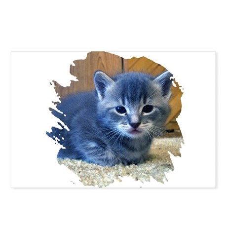 Grey Kitten Postcards (Package of 8)