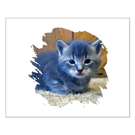 Grey Kitten Small Poster