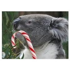 Christmas Koala Candy Cane Invitations