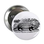 Drawing of a Badger Button