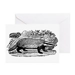 Drawing of a Badger Greeting Cards (Pk of 10)