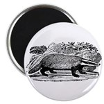 Drawing of a Badger Magnet