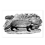 Drawing of a Badger Postcards (Package of 8)