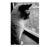 Kitten's Television - Postcards (Package of 8)