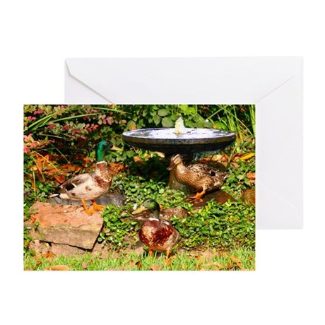 Wild Mallard Ducks Greeting Cards (Pk of 10)