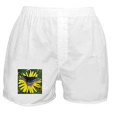 Black Swallowtail on Sunflower Boxer Shorts