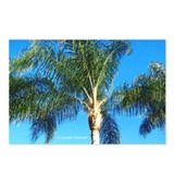 PALM TREE Postcards (8)