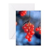 Greeting Cards (Pack of 6):  Highbush Cranberries