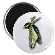 "Downy Woodpecker 2.25"" Magnet (10 pack)"