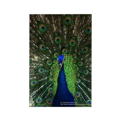 Colorful Peacock 2 Rectangle Magnet