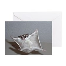 Sugar glider greeting Cards (Pk of 10)