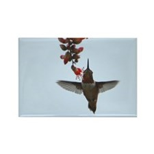Hummingbird Rectangle Magnet (100 pack)