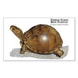 Three-Toed Box Turtle Rectangle Decal