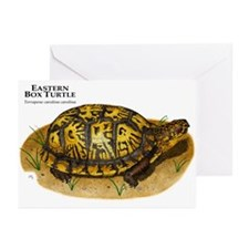 Eastern Box Turtle Greeting Cards (Pk of 10)