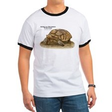 African Spurred Tortoise T