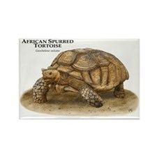 African Spurred Tortoise Rectangle Magnet